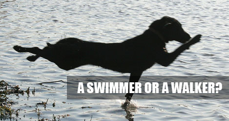 A Swimmer or A Walker